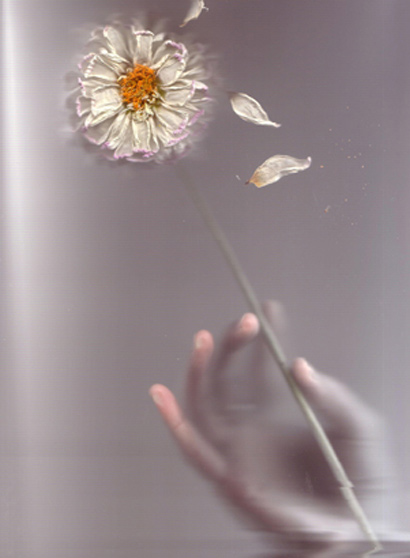 Flower Art Photography